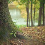 Przepiękny i {zadbany ogród to nie lada wyzwanie, zwłaszcza jak jego konserwacją zajmujemy się sami.